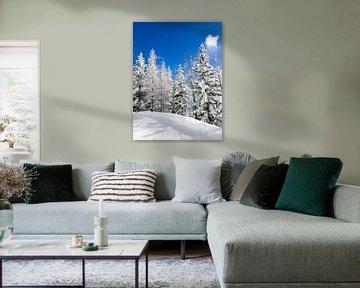 Besneeuwde bomen onder een blauwe hemel