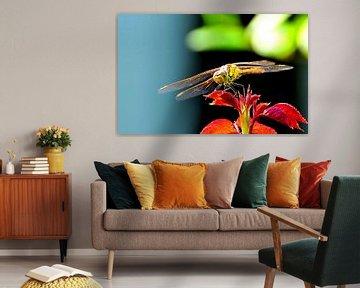 Libelle von Niek Slagter