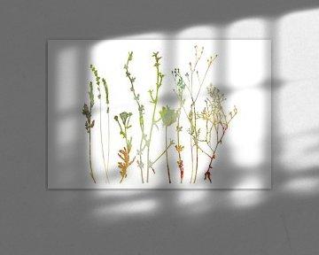 Sommerwiese Pflanzen, Kräuter und Blumen. Botanische Illustration  von Dina Dankers