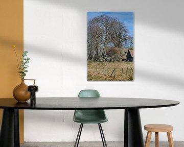 Boerderij in Noord Holland tussen bomen die nog niet in blad staan. von Harrie Muis