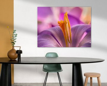 Krokus / Blume / Blütenblatt / Pistill / Natur / Licht / Orange / Gelb / Weiß / Rosa / Lila / Nahauf von Art By Dominic