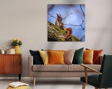 Eichhörnchen auf dem sonnigen Ast von Tobias Luxberg