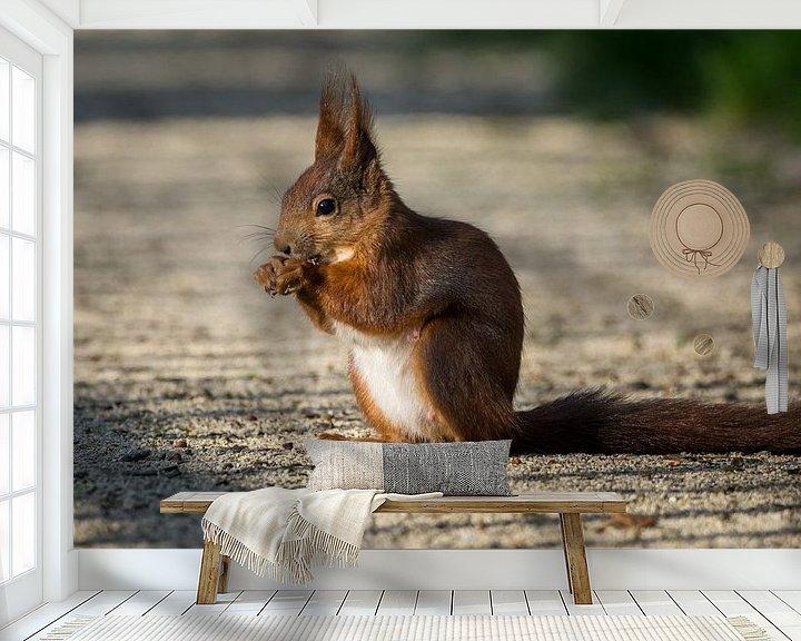 Beispiel fototapete: Eichhörnchen im Park von Tobias Luxberg