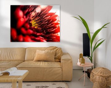 Gerbera Pomponi / Blume / Blütenblätter / Natur / Blendenfleck / Hell / Rot / Orange / Gelb / Weiß / von Art By Dominic