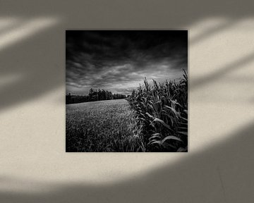 Between corn and maize von Ruud Peters