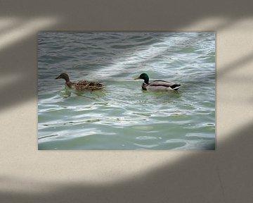 Alle eendjes zwemmen in het water van Ron van der Meer
