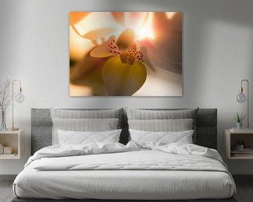 Orchidee / Blume / Blatt / Natur / Hell / Rosa / Gelb / Weiß / Warm / Nahaufnahme Makro von Art By Dominic