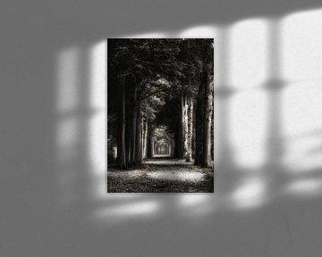 Volg Het Licht van Andrea Otte