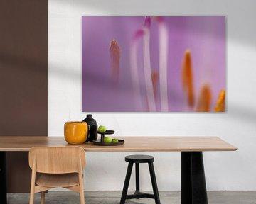 Makro-Aufnahme Staubblätter Blume von Geert Naessens
