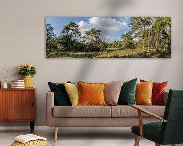 Bos met een  lente zonnetje. van Marcel Pietersen