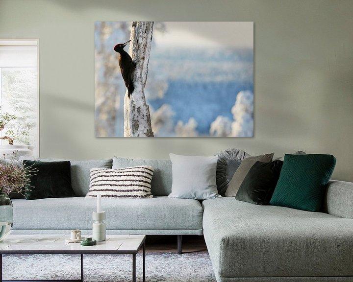 Sfeerimpressie: Zwarte Specht (Dryocopus martius) in Fins taiga winterlandschap van AGAMI Photo Agency