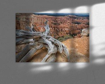 bryce canyon amerika von Jan Pel