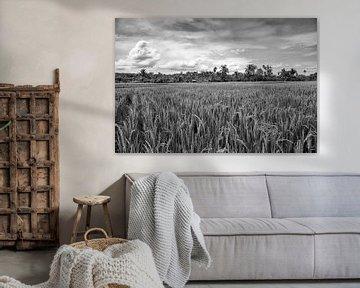 Indonesië rijstvelden von Jan Pel