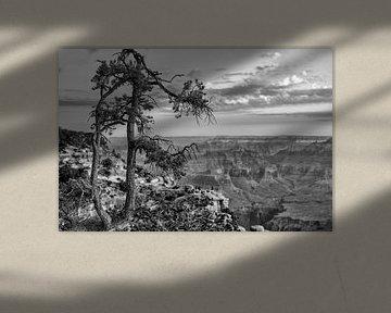 Grand Canyon amerika van Jan Pel
