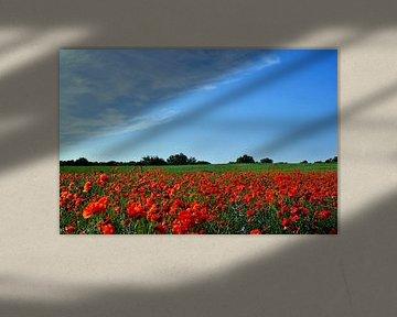 Poppy van Ostsee Bilder