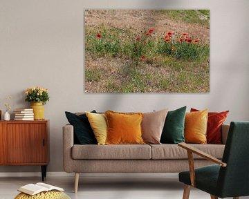 rode bloemen in het veld von Danielle Vd wegen