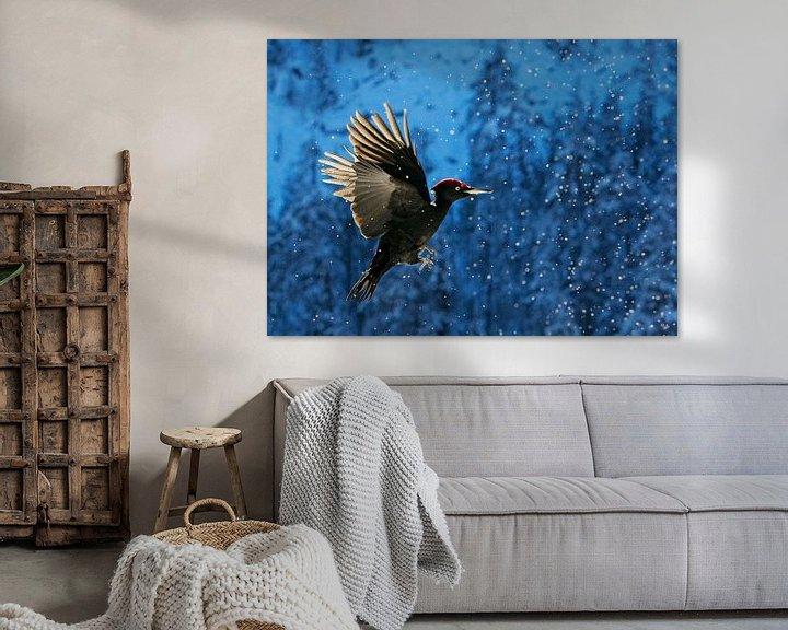 Sfeerimpressie: Zwarte Specht (Dryocopus martius) in vlucht van AGAMI Photo Agency