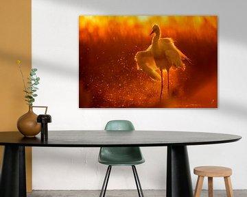 Großer Reiher (Egretta alba) badet im Licht des frühen Morgens. von AGAMI Photo Agency