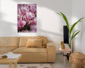 Tulpen / Tulips van Wilco Schippers