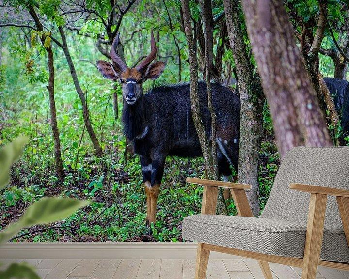 Sfeerimpressie behang: Nyala van Steven Groothuismink