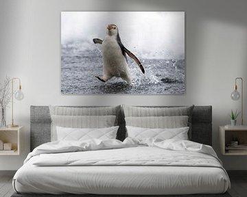 Königspinguin läuft übers Wasser von Beschermingswerk voor aan uw muur