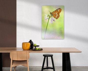 Roodbonte parelmoervlinder (Euphydryas maturna) rustend op een bloem von Nature in Stock