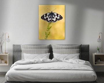 Dambordje (Melanargia galathea) vlinder rustend op een bloem von Nature in Stock