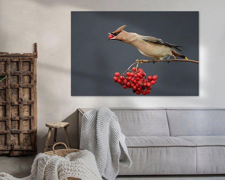 Sfeerimpressie: Bessen etende Pestvogel (Bombycilla garrulus)  van Beschermingswerk voor aan uw muur