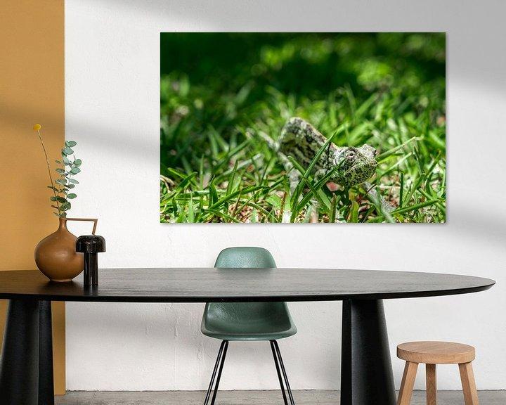 Sfeerimpressie: Kameleon van Steven Groothuismink