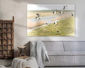 Oystercatchers / vrije vogels van Margo Schoote