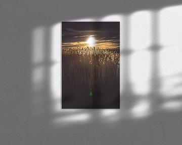 Hintergrundbeleuchtung auf Federn in einem Reedfeld von Fotografiecor .nl