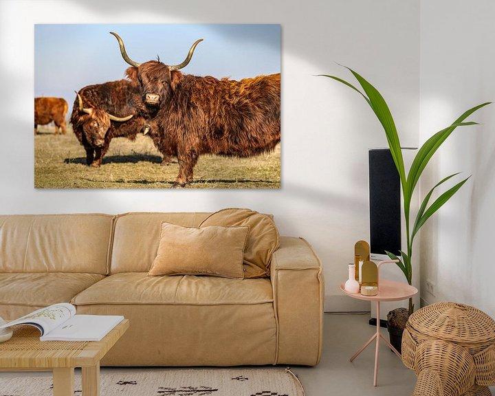Sfeerimpressie: Schotse hooglander met lange horens van Fotografiecor .nl