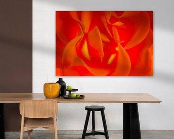 Rose on fire von Greetje van Son