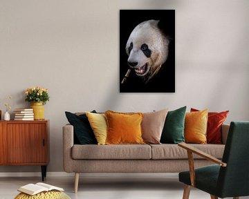 Panda portret von Jessica Blokland van Diën