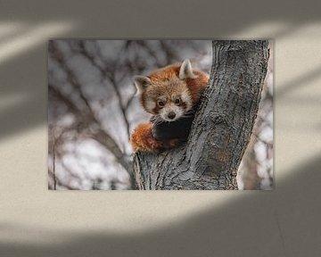 Rode panda von Jessica Blokland van Diën