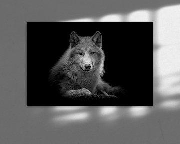 Hudson Bay Wolf von Jessica Blokland van Diën