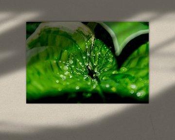 Hosta blad met druppels von Inge Heeringa