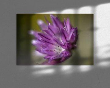 Bieslook bloem von Inge Heeringa