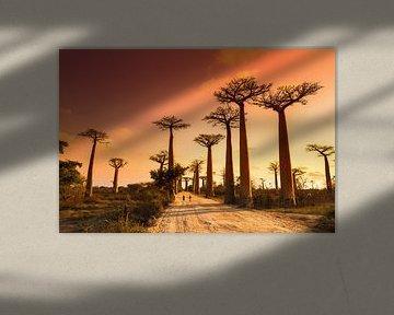 Allée des baobabs Madagaskar van Dennis van de Water