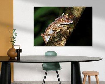 Uroplatus fimbriatus van Dennis van de Water