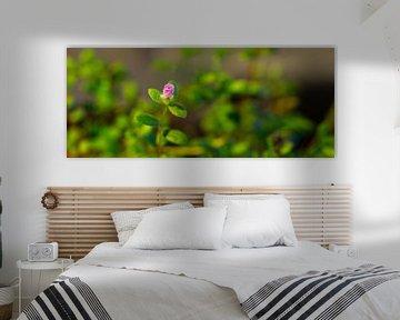 Plant Panorama von Vincent van den Hurk