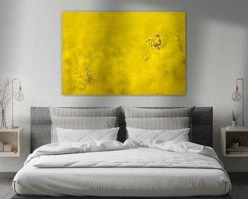 Gele Kwikstaart in een geel koolzaadveld von Beschermingswerk voor aan uw muur
