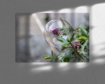 Bloem gevangen in zeepbel von Inge Heeringa