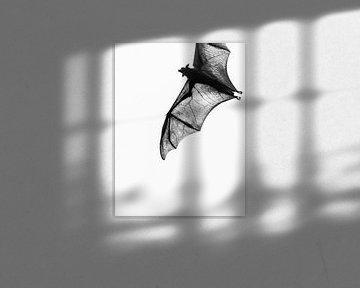 Schöne Flügel des Flying Fox. von Rebecca Gruppen