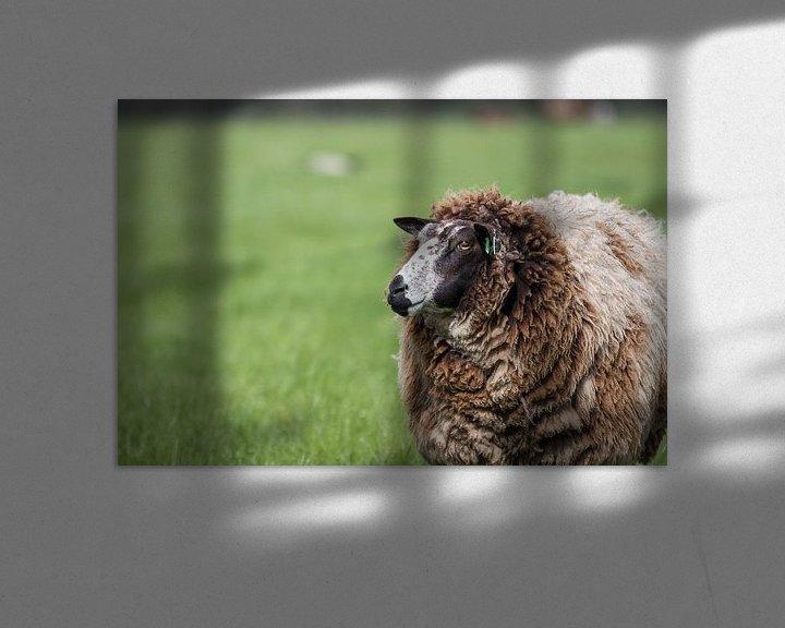 Beispiel: Niederländische Schafe im Frühling von Thijs van den Broek