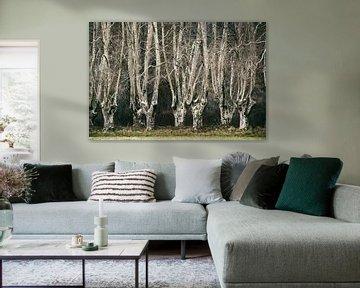 Versteckte Wälder Nr. 1 von Lars van de Goor