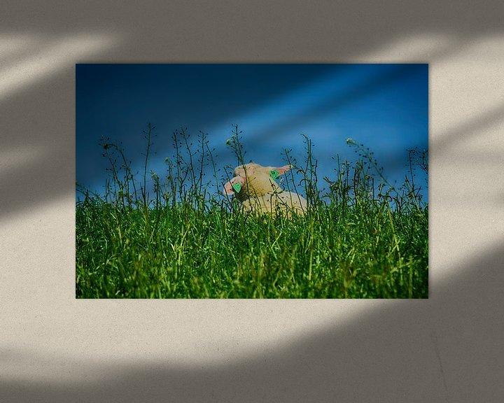 Sfeerimpressie: Lentegevoel (Lammetje) van FotoGraaG Hanneke