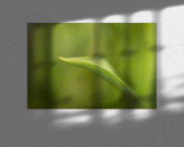 Grünes Blatt  Tulpe von Marianne Twijnstra-Gerrits