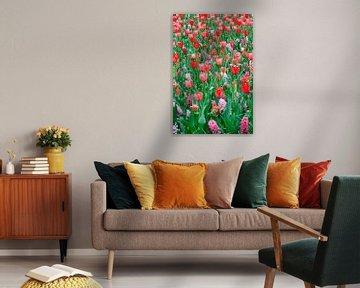 Veld met rode tulpen en roze hyacinten von Dennis van de Water