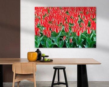 Rode tulpen met witte streep von Dennis van de Water